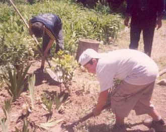 Digomi planting